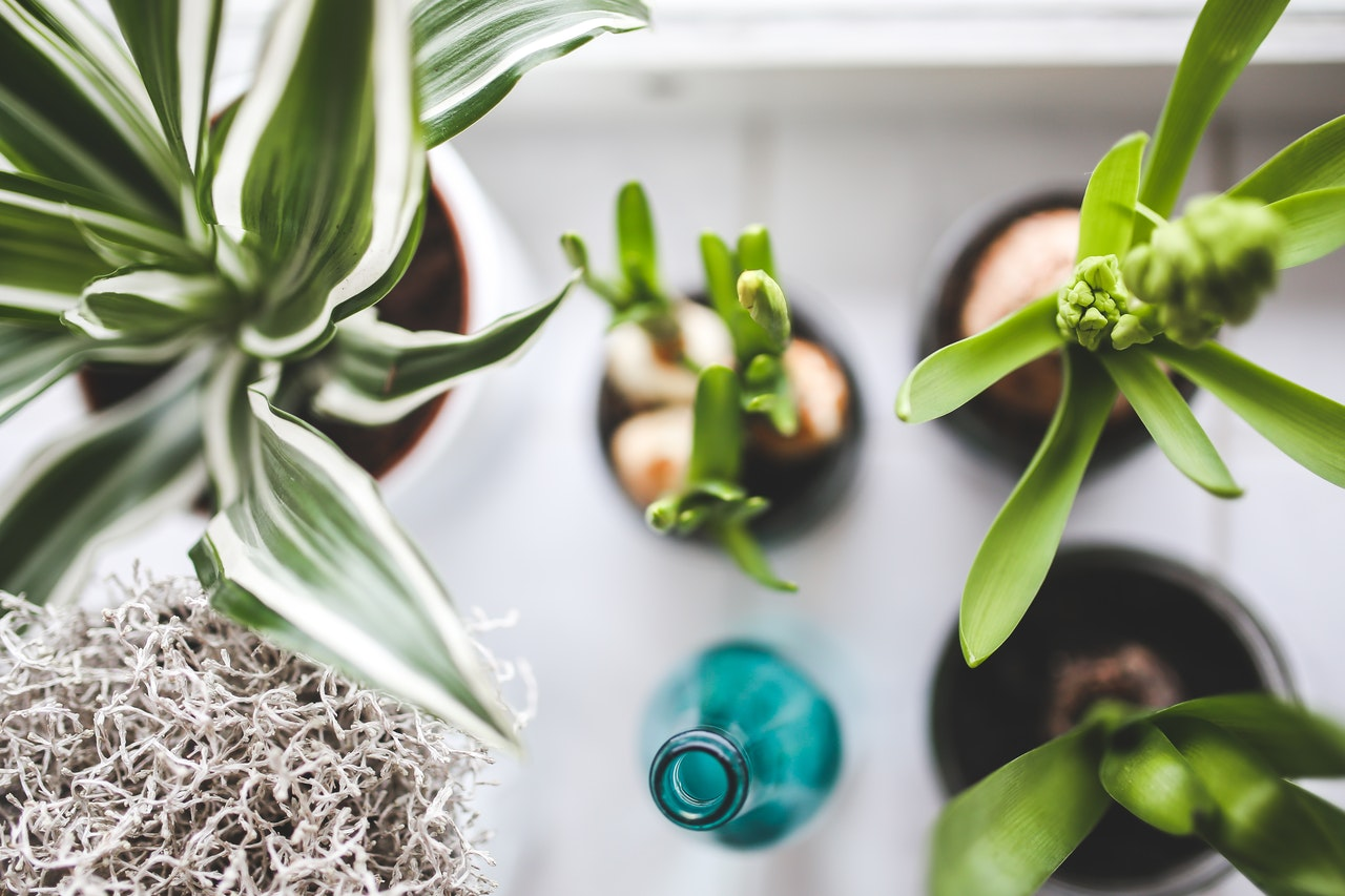 plant your savings seeds to grow your investments